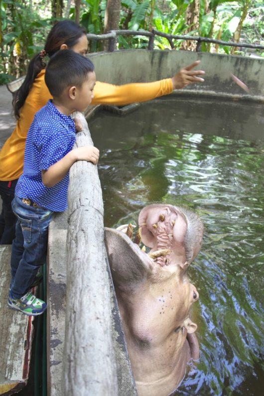 Chiangmai Zoo, チェンマイ動物園, カバ
