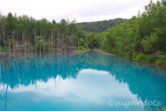 美瑛町, Biei-Cho, Blue Pond, 青い池