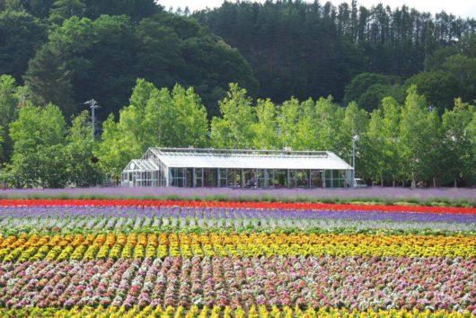 ファーム富田, Farm Tomita