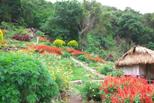 ドイ・プイ村, Doi Pui Village