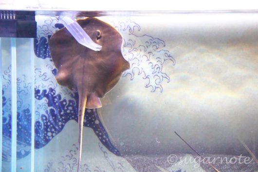 すみだ水族館, Sumida Aquarium, 江戸リウム, Edo-rium