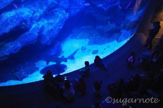 すみだ水族館, Sumida Aquarium, 東京大水槽, Tokyo Tank