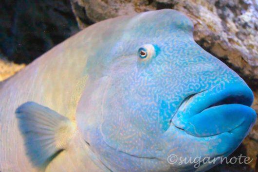 すみだ水族館, Sumida Aquarium, サンゴ礁, Aqua Gallery