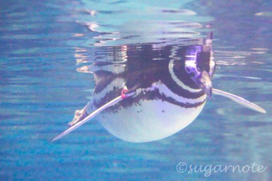 すみだ水族館, Sumida Aquarium, ペンギン, Penguins