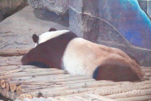 Chiangmai Zoo, チェンマイ動物園, パンダ館